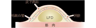 皮下組織の断面図