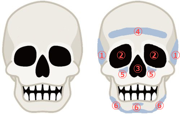 加齢による骨格の変化
