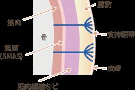 通常の皮膚の構造